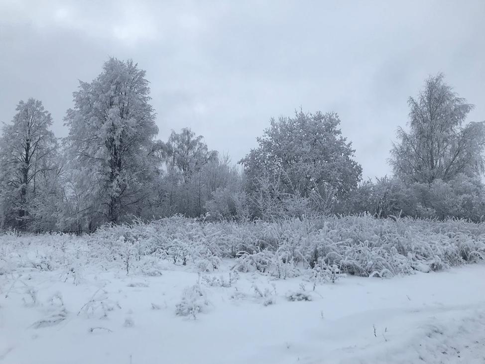 Зима в деревне Сурки